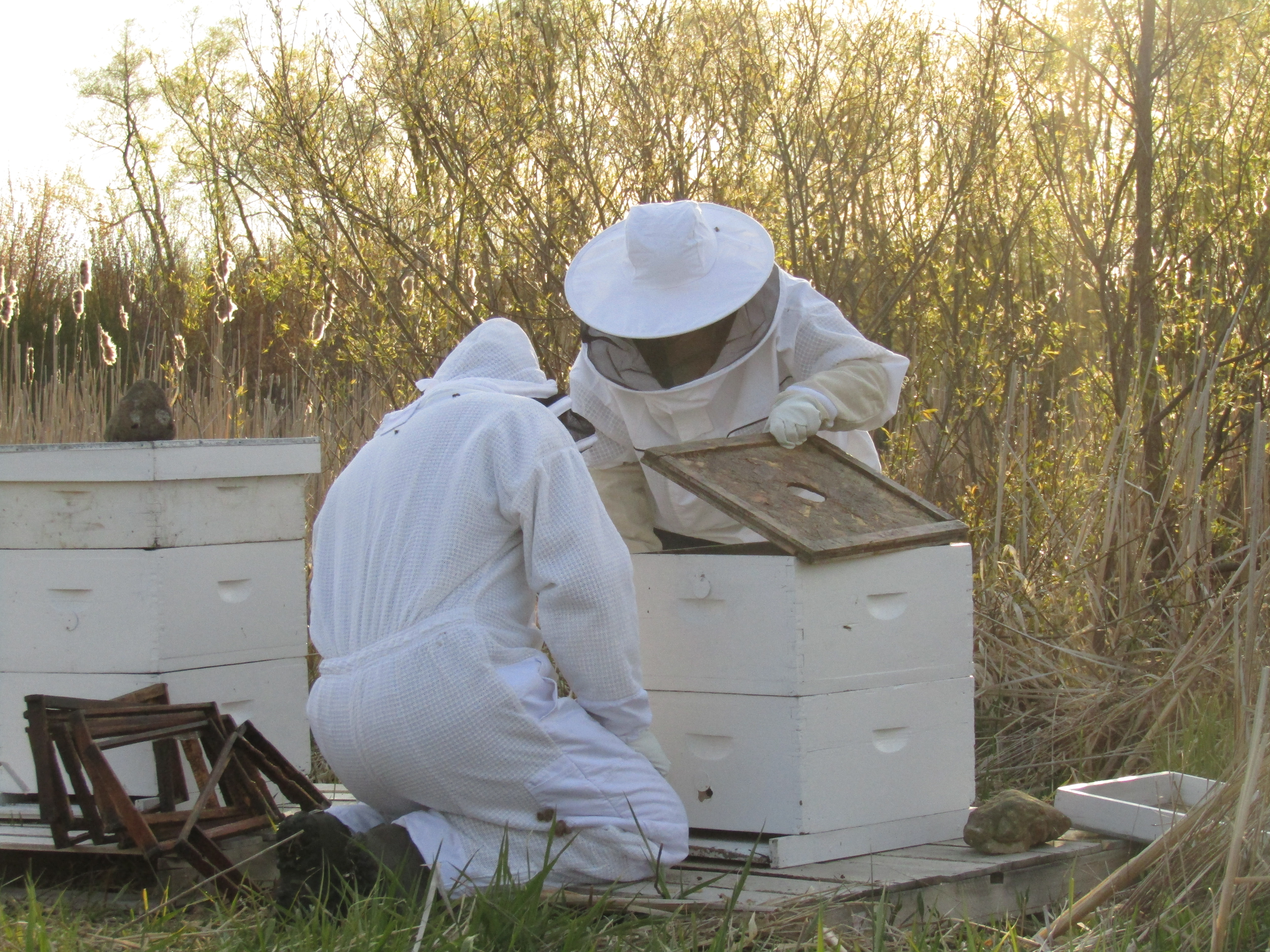 Bees: Part 2 - Spring Lake Homestead