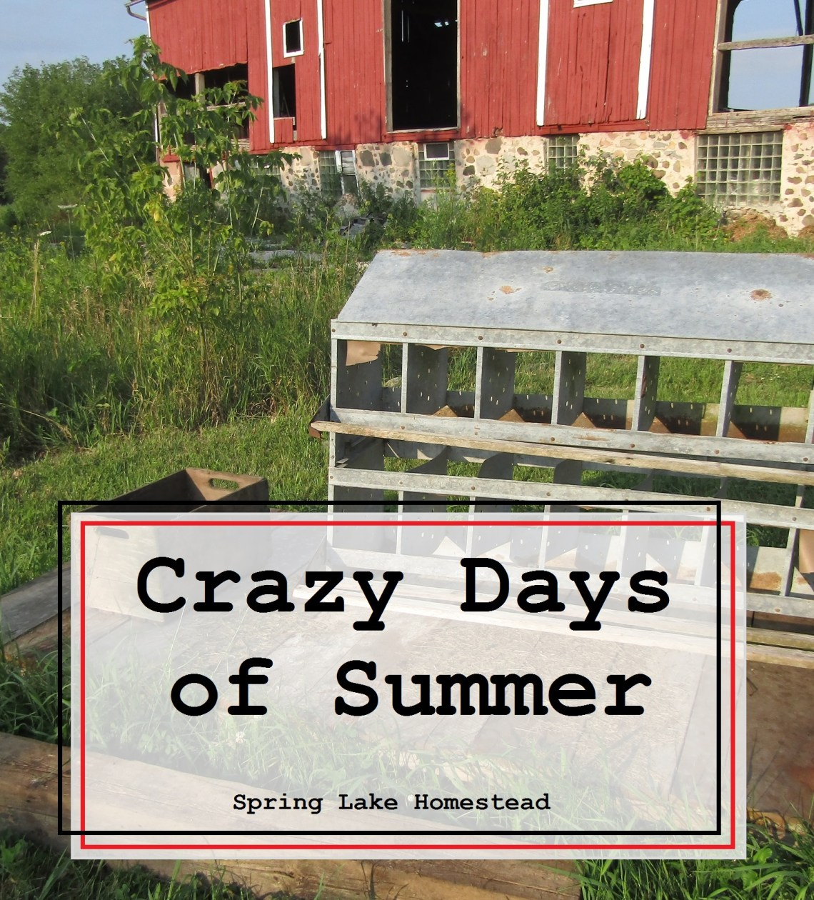 Crazy Days of Summer