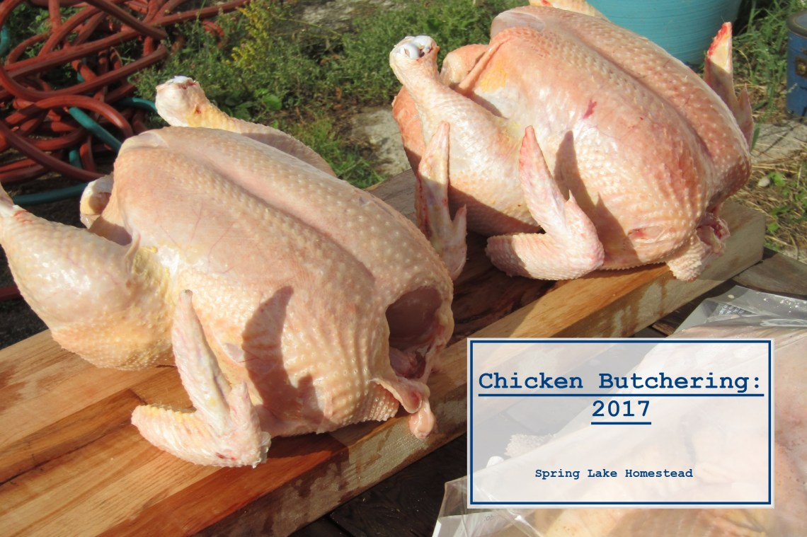 Chicken Butcherings 2017 - Spring Lake Homestead
