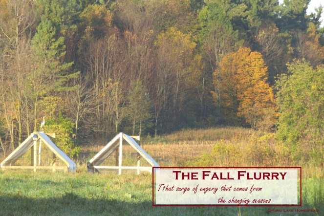 Fall Flurry