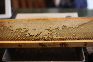Bees: Part 4