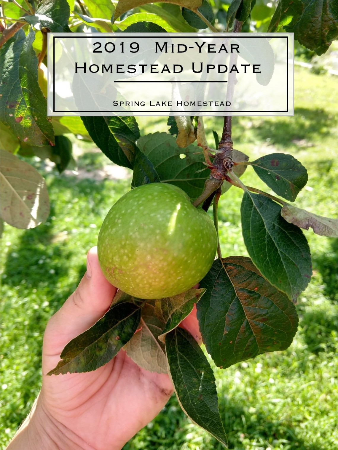 2019 Mid-year homestead update