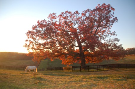 springledgefalltree