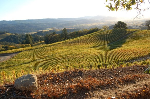 October vista from Spring Mountain Vineyard