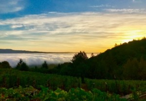 Behrens Family Winery - Sunrise and fog