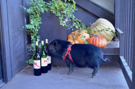 Keenan Winery Pet Pig