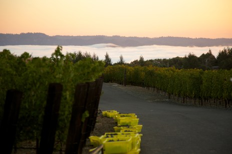 Vineyard 7&8 Sunset 2
