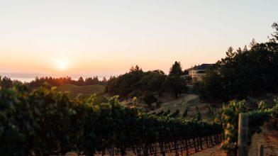 Vineyard 7&8 Sunset