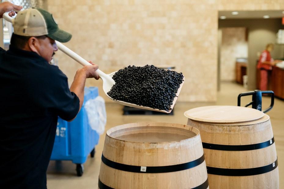 Vineyard 7&8 Winemaking