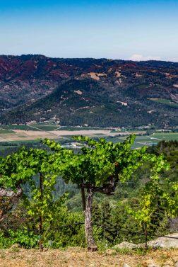 Barnett Vineyard - Vine with a View