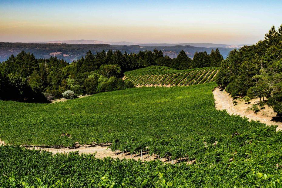 Vineyard 7 and 8 - Looking East Over the Vaca Range_