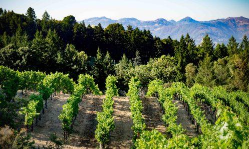 Vineyard 7 and 8 - Rolling Hillside Vineyard