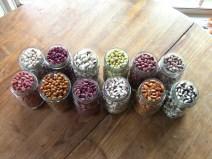 Dry bean varieties