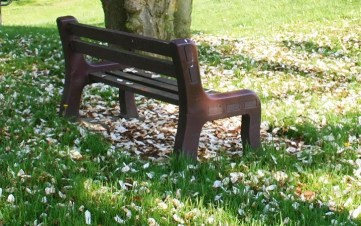 Park bench next to a tree with flower petals on the ground.
