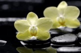 original-orchids