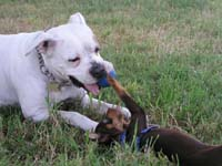 Rolfs Dog
