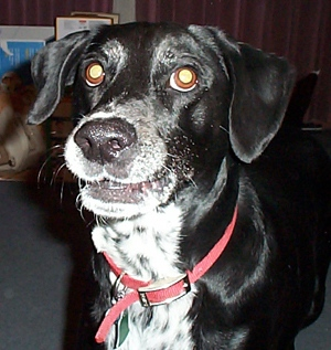 DOGS_32-dippy_smile