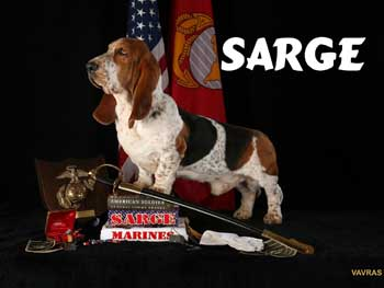 DOGS_268-SARGE_STANDING