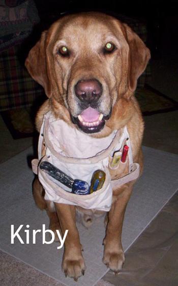 DOGS_284-Kirby_the_Helper2