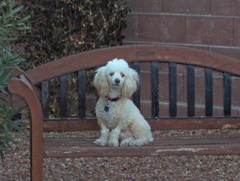 DOGS_301-100_0421