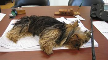 DOGS_322-Workin_Hard