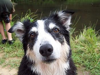 DOGS_365-Flip