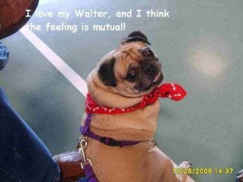 DOGS_379-I_love_my_Wally