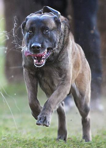 DOGS_417-Congressional_Medal_Of_Honor_Award_for_a_K9