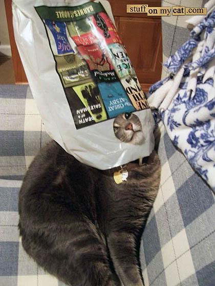 book-cat