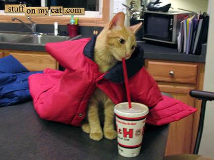 cat-magic