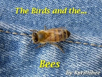 The Birds and the Bees: Talking with Your Kids About Sex