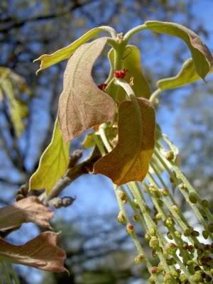 spring-leaves-1