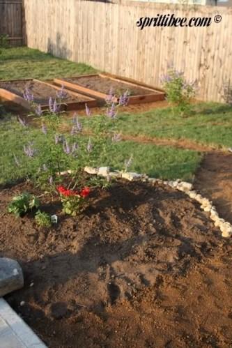 vitex planting