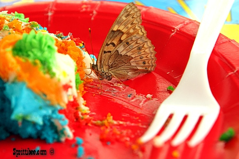 hparty-butterfly3