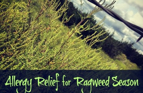 Allergy Relief for Ragweed Season (…or any allergy season)