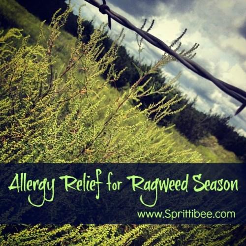 what ragweed really looks like