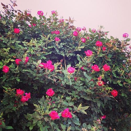 Blooms!
