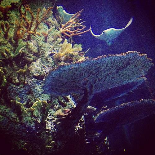 #galveston #aquarium #moodygardens #thsc #fieldtrip #latergram