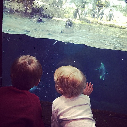 Penguin watching. #moodygardens #mgmediatour13