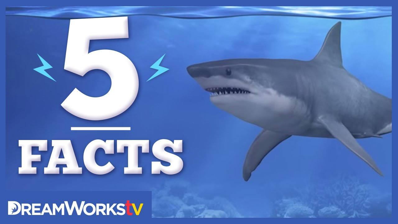 5 Facts About Sharks That Will Make Your JAWS Drop 5 FACTS