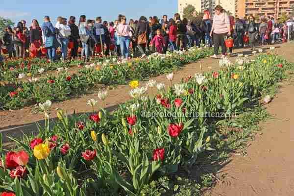 Tulip Roma 2019 cose da sapere