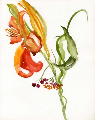 Day Lily Watercolor by Jean Patiky