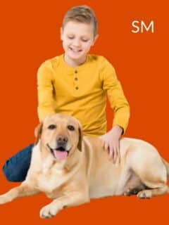 jobs for pet lovers sproutmentor