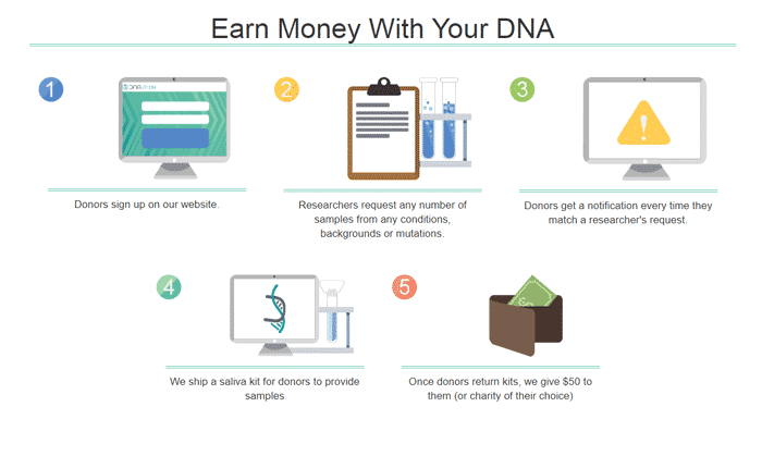 dna-simple-how-it-works