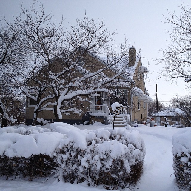 More Winter Fun in Spruce Ave!
