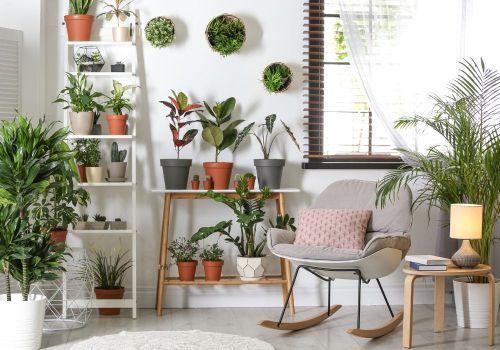 indoor-house-plants