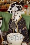 lustige Fotos zu Männer, Hund ,Golf