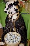 lustige Fotos zu  Männer, Hund, Golf