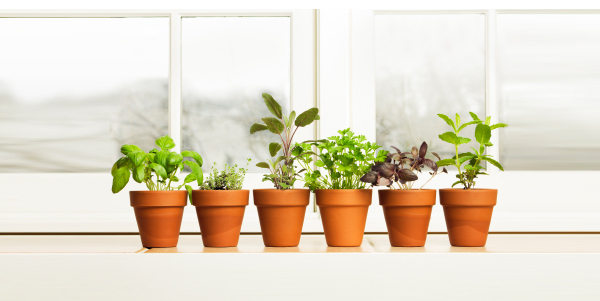 plant-spring-winter-tips-mood-lift-istock-spry