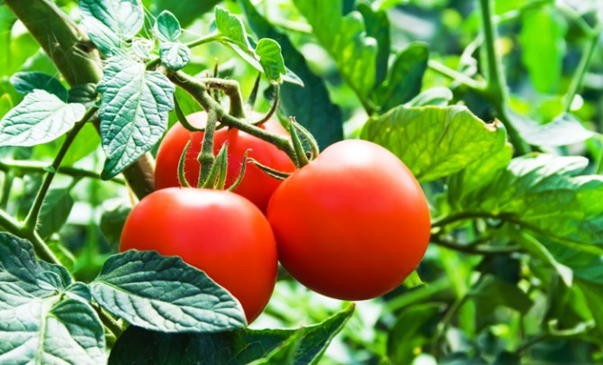 health-benefit-tomatoes-fruit-vegetable-produce-vitamin-food-diet-spry